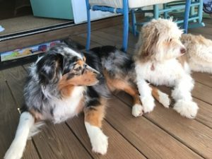 Picture of Susan's dogs
